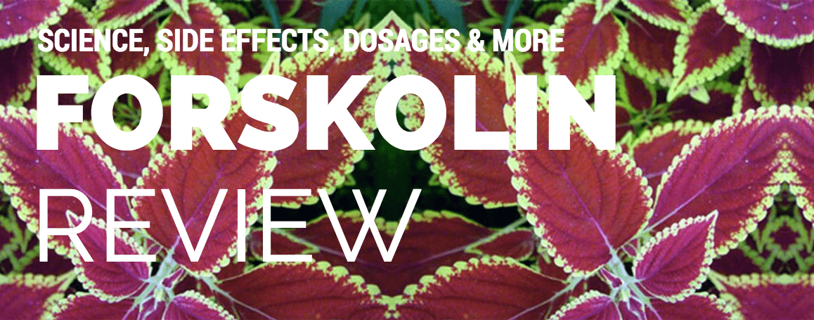 FORSKOLIN review - header-min