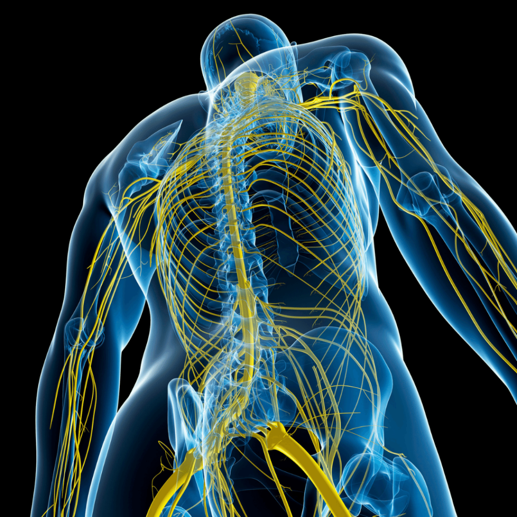Acupuncture improves the mind/body connection, which is incredibly valuable for supporting athletic performance. Acupuncture stimulates a parasympathetic nervous system response, sometimes call a state of rest and digest.